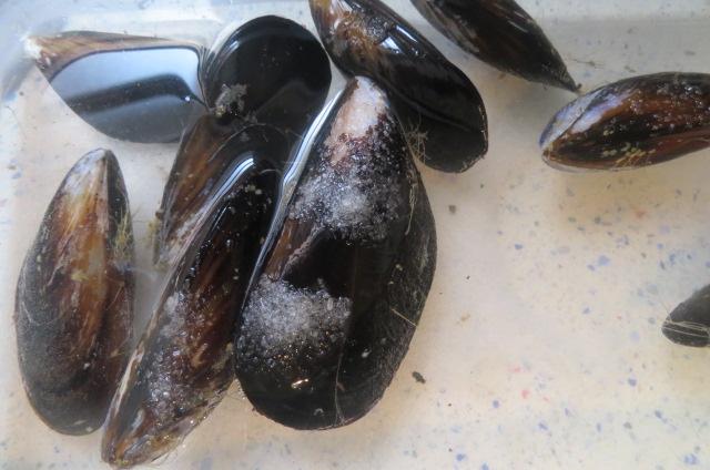 mejillones limpios en agua con sal y  vinagre