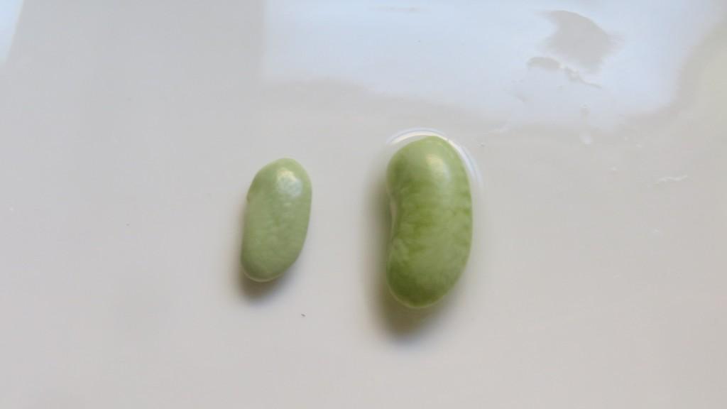 verdina seca y verdina una vez remojada